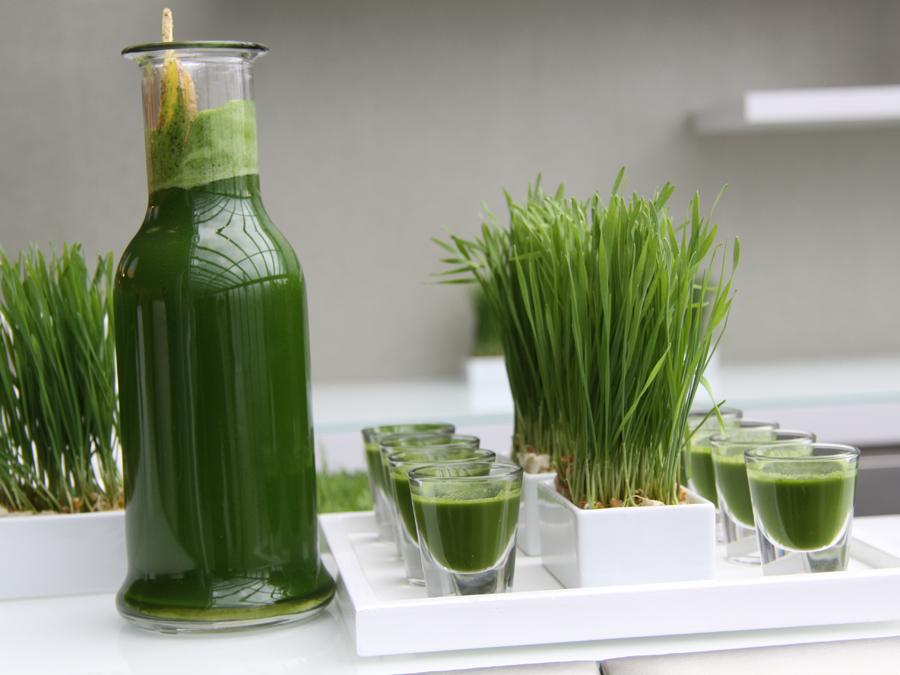 Wheat Grass Bar mit Shots aus frisch gepresstem Weizengras